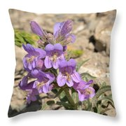 Crested Beardtongue Throw Pillow