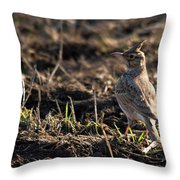 Crested Lark Throw Pillow