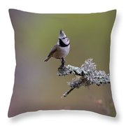 Crested Tit In Woodland Throw Pillow
