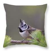 Crested Tit Pine Throw Pillow