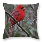 Crimson Cardinal Throw Pillow