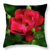 Crimson Red Rose By Kaye Menner Throw Pillow