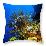 Crinoid At Pakin Atoll2 Throw Pillow