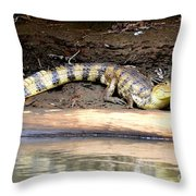 Croc Time Throw Pillow
