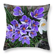 Crocus 6675 Throw Pillow