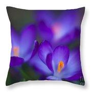 Crocus Blooms Throw Pillow