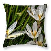Crocus White Flowers Throw Pillow