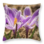 Crocuses 2 Throw Pillow