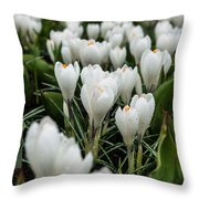 Crocuses 5 Throw Pillow