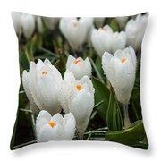 Crocuses 6 Throw Pillow