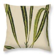 Croton Variegatum Angustifolium Throw Pillow