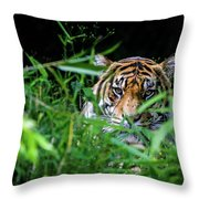Crouching Tiger Hidden Cameraman Throw Pillow