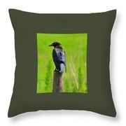 Crow 5 Throw Pillow