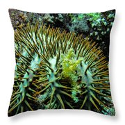 Crown Of Thorns In Pohnpei Throw Pillow