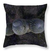 Crown Royal Saguaro Throw Pillow
