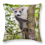 Crowned Lemur Madagascar Throw Pillow