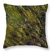 Crystal Clear Waters Throw Pillow
