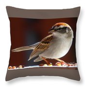 A Hungry Chipping Sparrow Throw Pillow