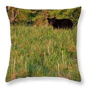 Cub Scout Throw Pillow