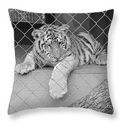 Cubs Throw Pillow