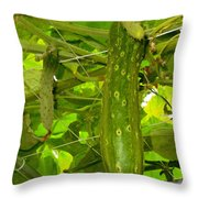 Cucumber On Tree In The Garden 1 Throw Pillow