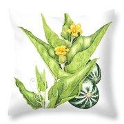 Cucurbita Foetidissima Throw Pillow