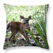 Cumberland Island Deer Throw Pillow