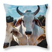 Cupcake Cows Throw Pillow