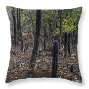 Curacao - Blooming Cacti In The Forest Throw Pillow