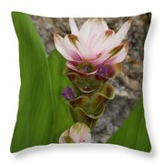 Curcuma Light Pink Throw Pillow