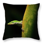 Curious Anole Throw Pillow