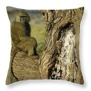 Curious Baboon Throw Pillow