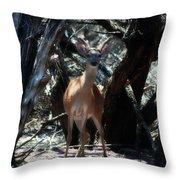 Curious Bambi Throw Pillow