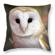 Curious Barn Owl Throw Pillow