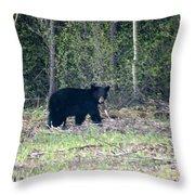 Curious Black Bear  Throw Pillow