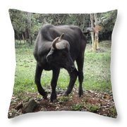 Curious Buffalo Throw Pillow