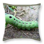 Curious Caterpillar Throw Pillow