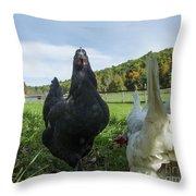 Curious Chicken Throw Pillow