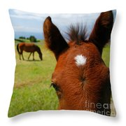 Curious Colt Throw Pillow
