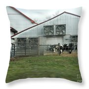 Curious Cows Throw Pillow