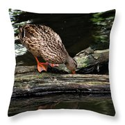 Curious Duck Throw Pillow