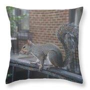 Curious Gray Squirrel  Throw Pillow