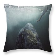 Curious Gray Whale And Tourist Throw Pillow