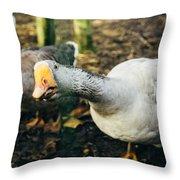 Curious Grey Goose Throw Pillow