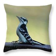 Curious Hairy Woodpecker Throw Pillow
