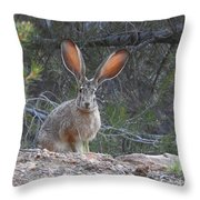 Curious Jack Throw Pillow