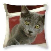 Curious Kitten Throw Pillow