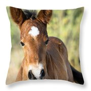 Curious Little Colt  Throw Pillow