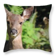 Curious Little Deer Throw Pillow