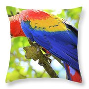 Curious Macaw Throw Pillow
